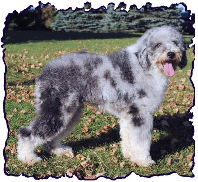 How Old Should A Dog Be Before Clipping